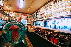 Seaside Aquarium Gift Shop image