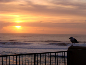 Oregon Coast Lodging Specials