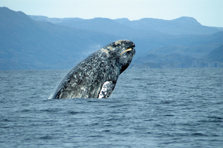 Whales In Long Island Sound