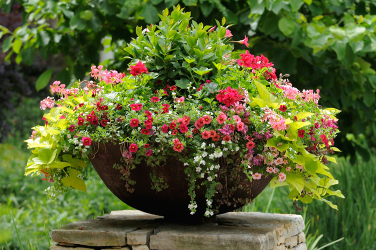 Just As A Garden Can Be Work Of Art Well Designed Container An Attractive Focal Point On Your Patio Balcony Deck Or Doorstep