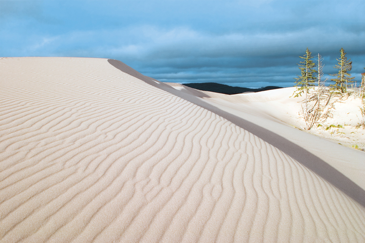 Nearly constant winds shape sand into dramatic dune formations at the Umpqua Dunes area, south of Reedsport on the Oregon Coast.