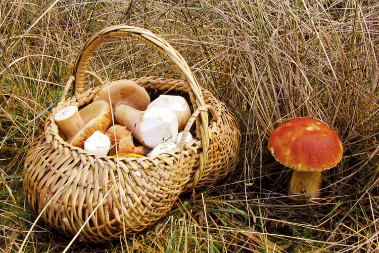 Forage for Fungi this Fall in Oregon at Fort Stevens State Park