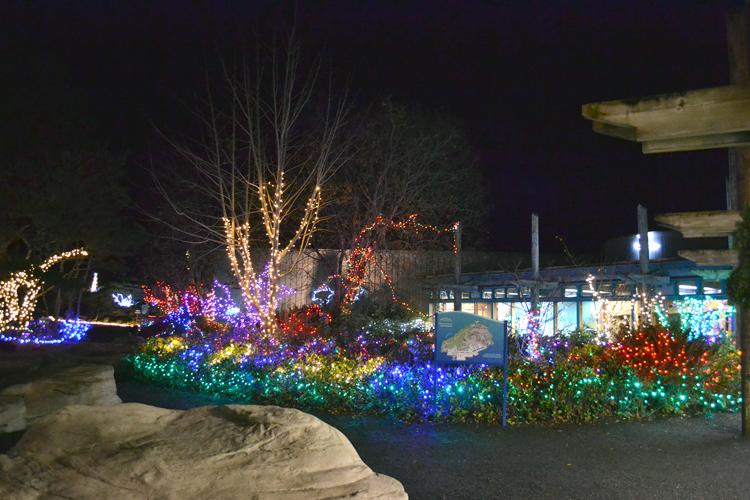 oregon coast aquarium sea of lights celebration newport or