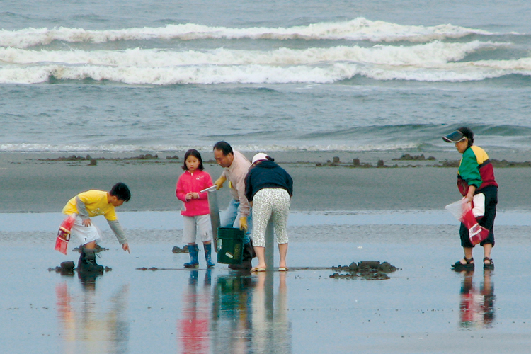 Clamming at Ocean Park is a popular activity.
