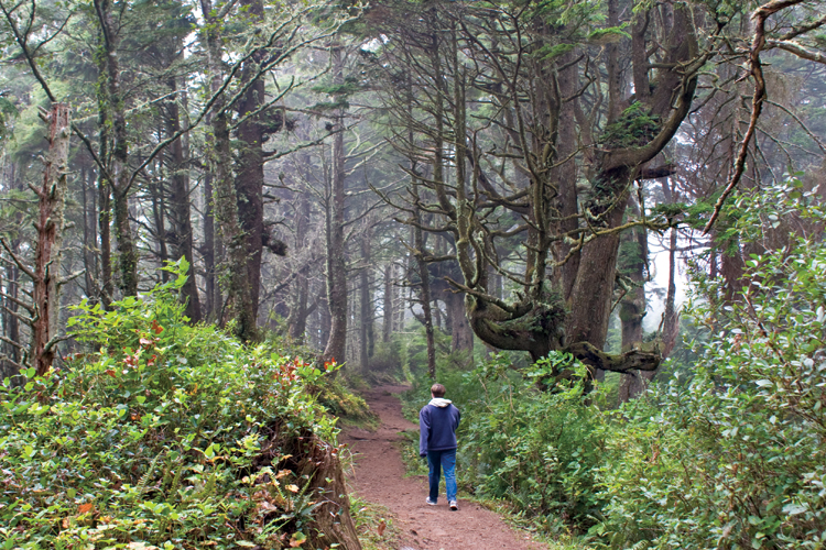 Cape Lookout trail provides hikers with a neat footpath for one stretch of the journey.