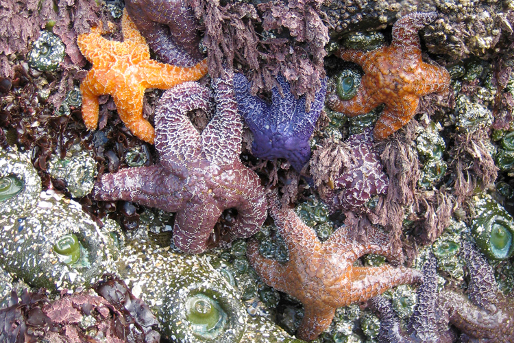 Intertidal pools are home to amazing marine life.