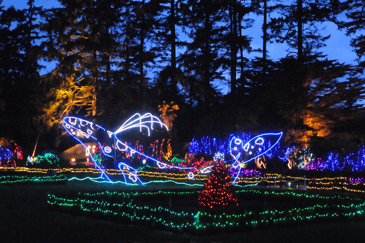 Holiday Lights at Shore Acres State Park on the Oregon Coast