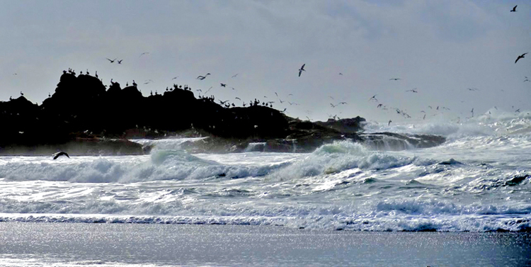 Rocky outcroppings created breathtaking views of crashing waves and soaring seabirds.