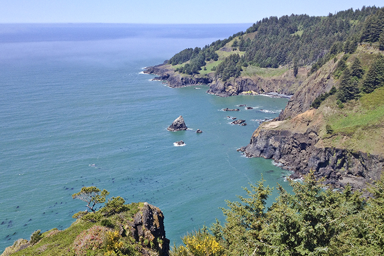 The Otter Crest State Scenic Viewpoint on top of Cape Foulweather offers expansive views to the north and south.