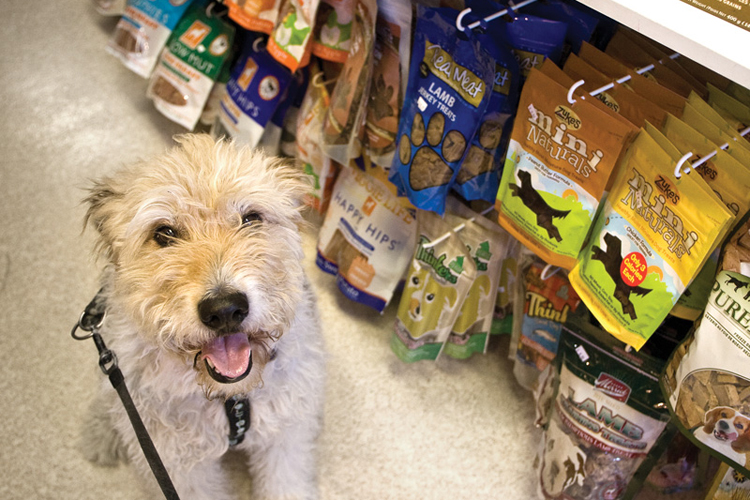 "Jackson has found some things he likes in the treat aisle at Paws in the Sand. ""I've been a real good boy,  Dad!"""