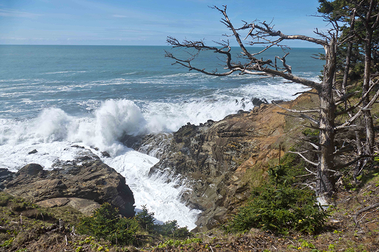 View from hiking trail at Cape Sebastian State Park