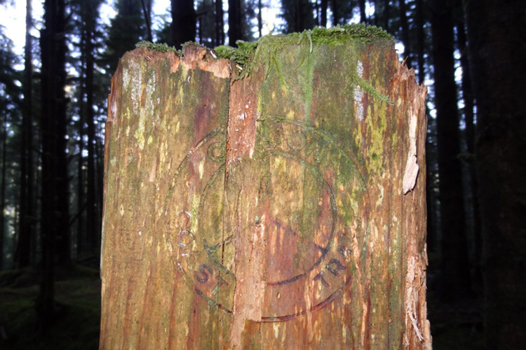 Trail head marker on a tree stump