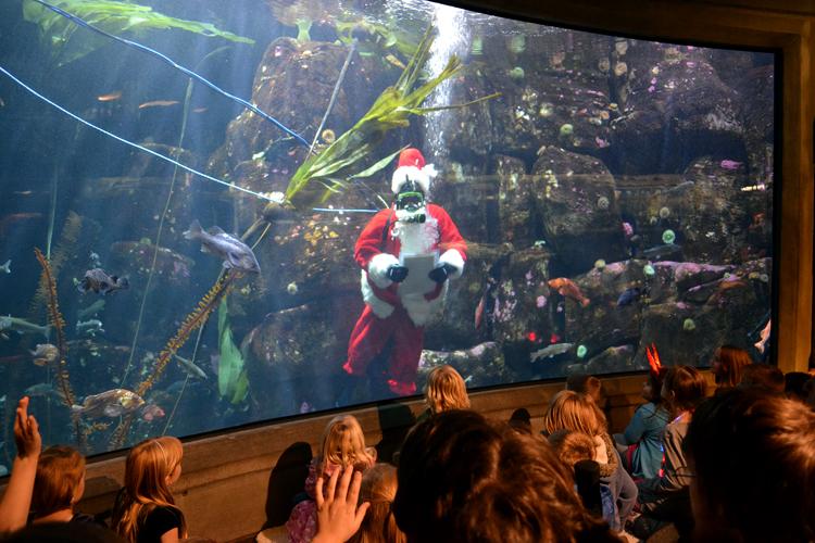 An Ocean Of Holiday Cheer Will Greet Visitors Every Weekend In December At Oregon Coast Aquarium Newport