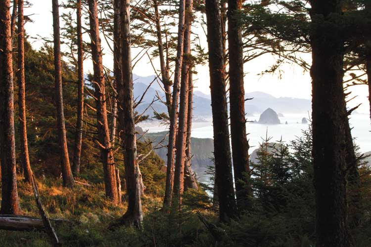 Crescent Beach Trail in Ecola State Park