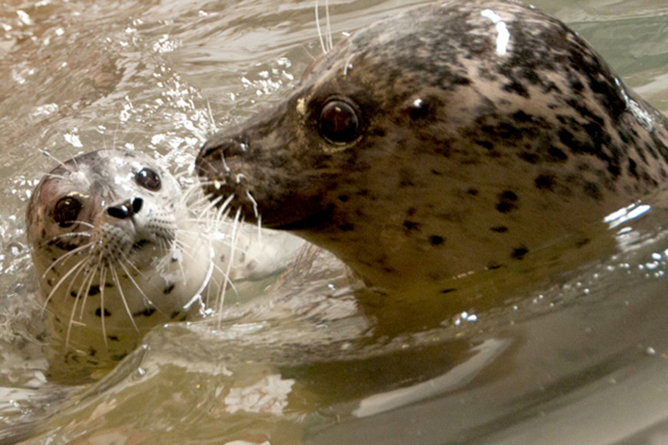A Star is Born! Seaside Aquarium Welcomes First Baby Seal Pup in 5 Years